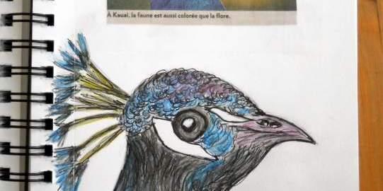 Dessin d'oiseau