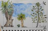 Les arbres autour de la piscine du Santa Clara